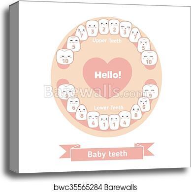 photograph regarding Baby Teeth Chart Printable identify Little one teething chart canvas print