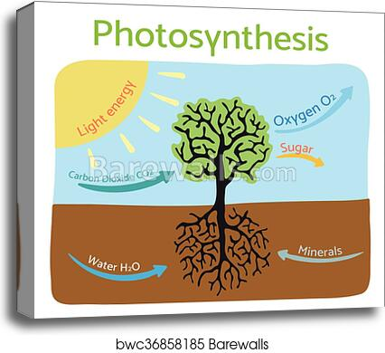 Canvas print of photosynthesis process diagram schematic vector canvas print of photosynthesis process diagram schematic vector illustration ccuart Image collections