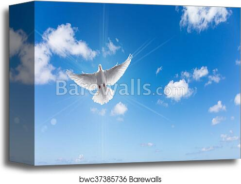 Canvas Print Of White Dove In A Blue Sky Symbol Of Faith Barewalls