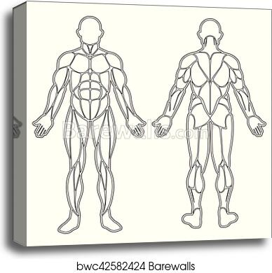 Canvas Print of Human body muscles silhouette | Barewalls Posters ...