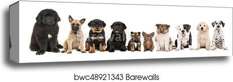 Large Group Of Ten Different Kind Of Breed Puppies On A White