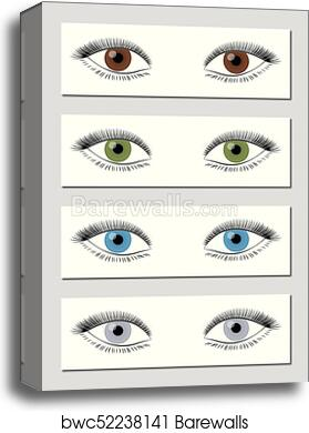 Eye Color Chart Brown Green Blue Gray Canvas Print Barewalls