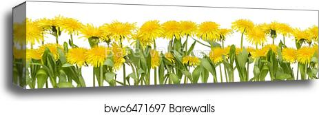 Canvas Print Of Real Spring Flowers Border Barewalls Posters