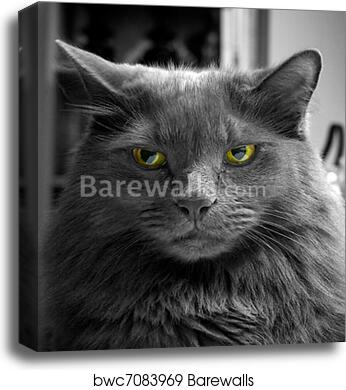 Canvas print of angry black and white cat with green eyes