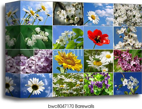 canvas print of flowers collage barewalls posters prints
