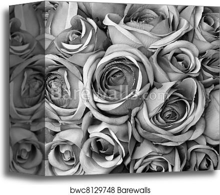 Background With Roses In Black And Art Print