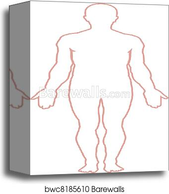 Canvas Print Of Human Body Outline Barewalls Posters Prints