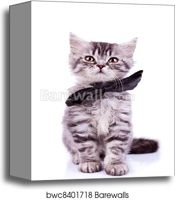 canvas print of seated little silver tabby cat barewalls posters