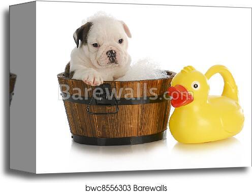 Canvas Print of Dog bath   Barewalls Posters & Prints   bwc8556303