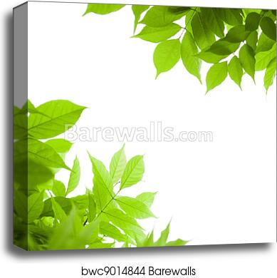 Green Leaves Border For An Angle Of Page Over A White Background